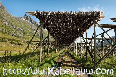Stokvis drogen in Lofoten Noorwegen