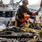 Skrei vissen Noorwegen